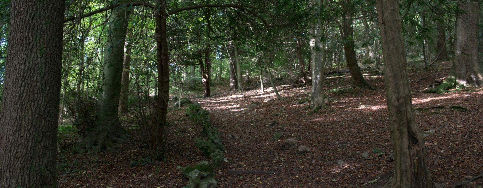 Explore Serpentine Woods in Kendal