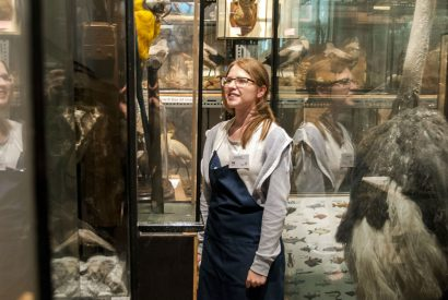 Kendal Museum's antique taxidermy collection