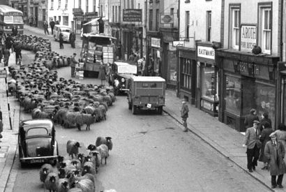 The famous Hardman image of a flock of sheep coming down Allhallows Lane in Kendal. Courtesy of the Museum of Lakeland Life & Industry, Lakeland Arts