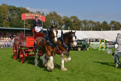 Westmorland County Show Shire Horses Display